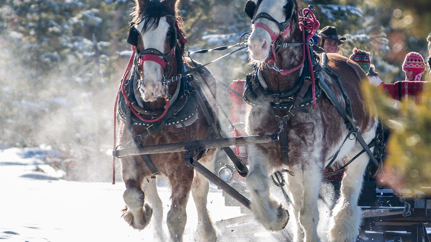 sleigh rides in and around the town of winter park